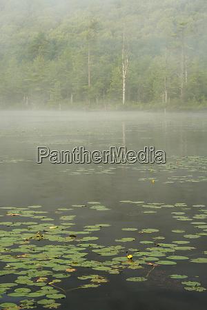 usa new york state morning mist