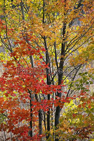 usa new york state backlit autumn