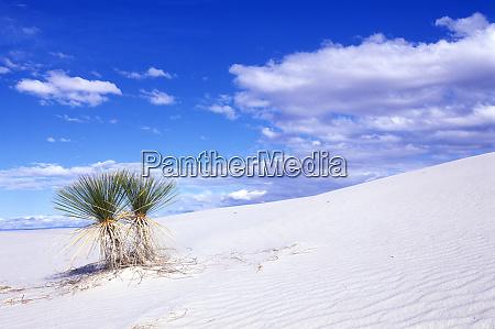 white sands nm new mexico usa