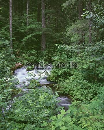 usa oregon willamette national forest roaring