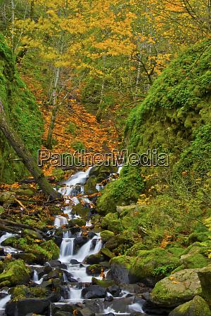 autumn starvation creek falls columbia gorge