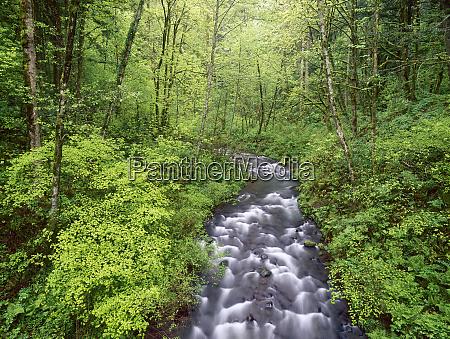bridal veil creek columbia river gorge