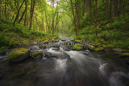 peaceful river flowing through a forest