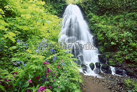 fairy falls wildflowers columbia gorge oregon