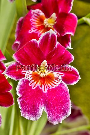 usa pennsylvania kennett square orchid