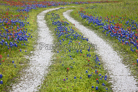 tracks leading through a wildflower field