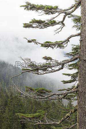washington mount rainier national park evergreen