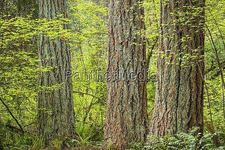 usa washington state millersylvania state park