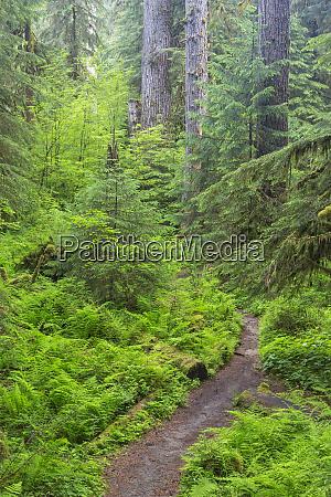 usa washington olympic national park forest