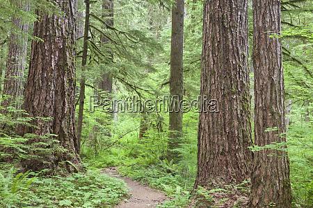 usa washington olympic national forest trail