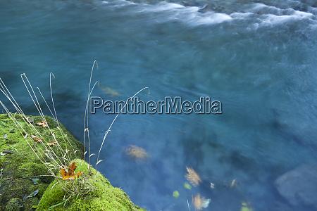usa washington scenic of quinault river