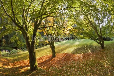 usa washington bainbridge island fall scenic