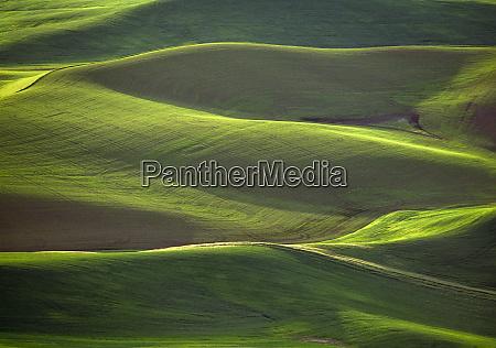 usa washington state palouse rolling wheat