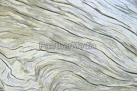 driftwood along rialto beach olympic national