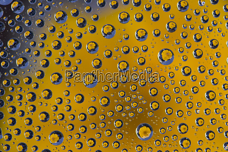 yellow zinnia reflections in dew drops