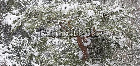 fresh snowfall kubota gardens seattle washington