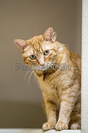issaquah washington state usa cat sitting