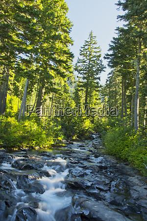 paradise river mount rainier national park