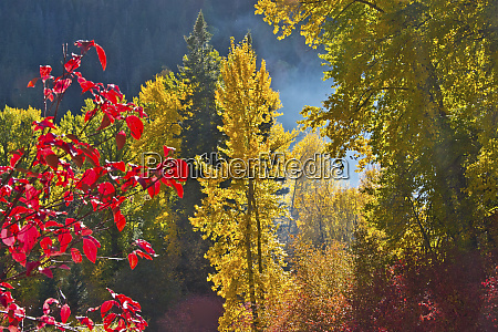 fall foliage nason creek area wenatchee
