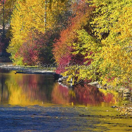 fall foliage nason creek wenatchee national