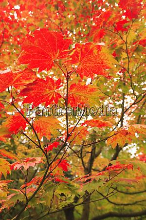 japanese garden washington park autumn colors