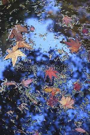 washington park arboretum autumn colors seattle