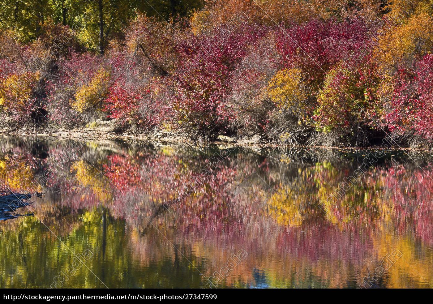 fall, foliage, , white, river, area, , wenatchee - 27347599