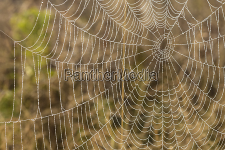 spiderweb in fog at sunrise in