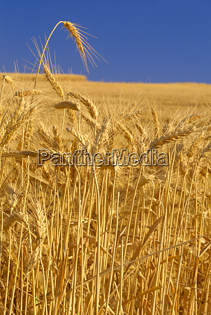 na usa washington state palouse region
