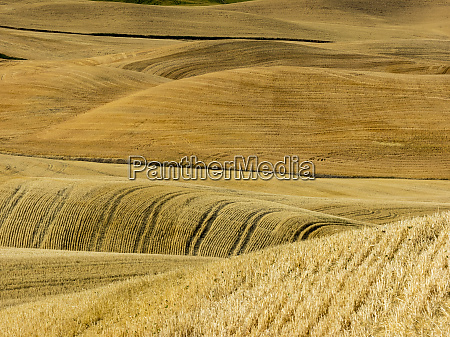 fields during harvest