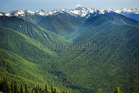 green valleys evergreens snow mountains hurricaine
