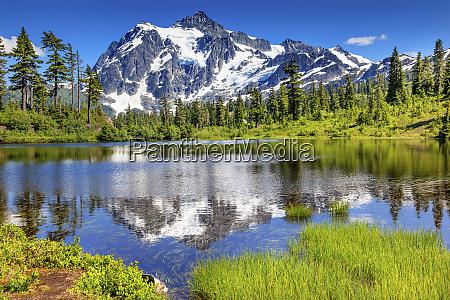 picture lake evergreens mount shuksan mount