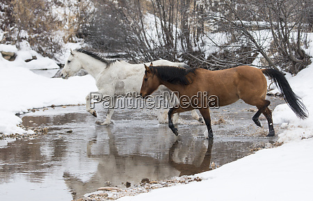 wintertime hideout ranch wyoming with horses