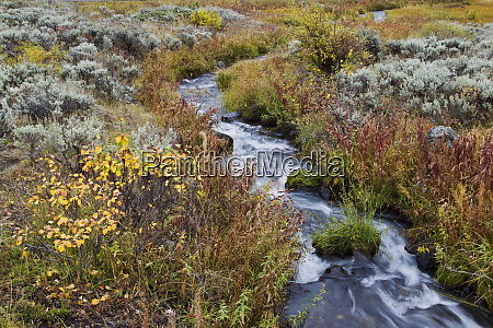 autumn creek yellowstone national park