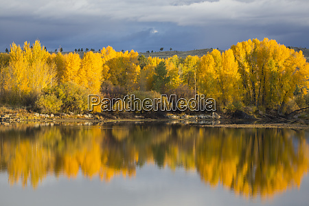 usa wyoming sublette county the cottonwood