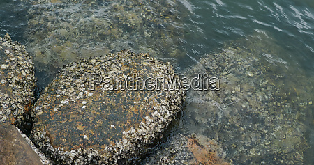 sea coast with rock and stone