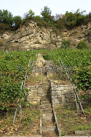 stairs leading into a vineyard