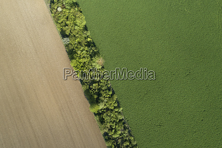 aerial view trees and agricultural fields