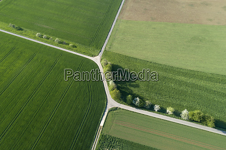 aerial view of treelined road with