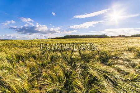 uk scotland east lothian field of