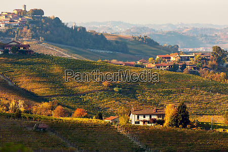autumnal hills and vineyards in evening