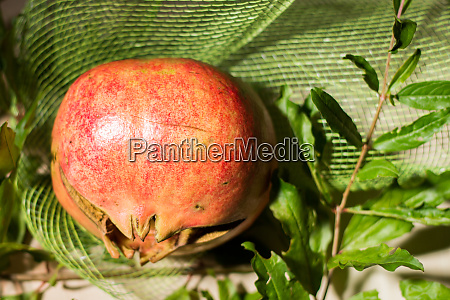 pomegranate is a very special fruit