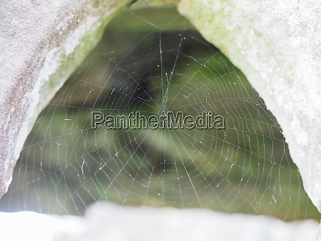 spider web selective focus