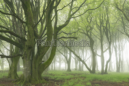 deciduous trees with spring foliage in