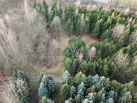 a forest trees seen from the