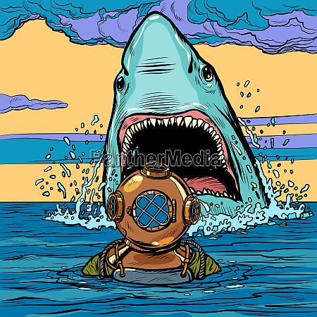 shark attack on diver