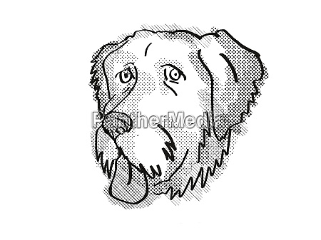 aussiedoodle dog breed cartoon retro drawing