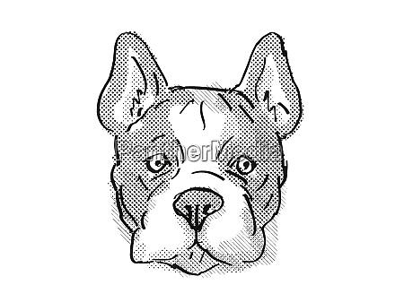 french bulldog dog breed cartoon retro