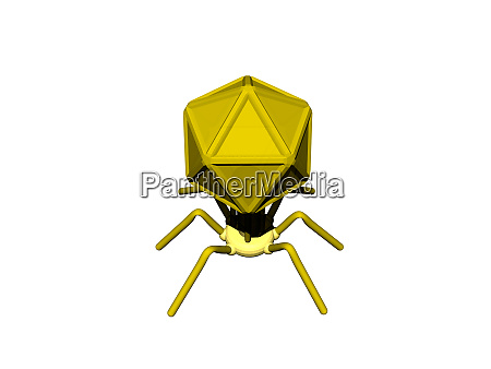 bacteriophage as a virus against bacteria