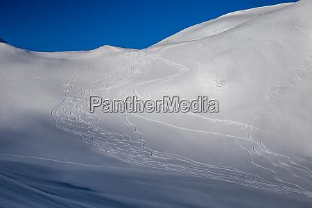 painting skiers in powder snow